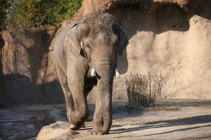 800px-STL_Elephant[1]